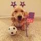 Cupcake the Golden Retriever has her own personal soccer ball. Source: Instagram user cupcakethegolden