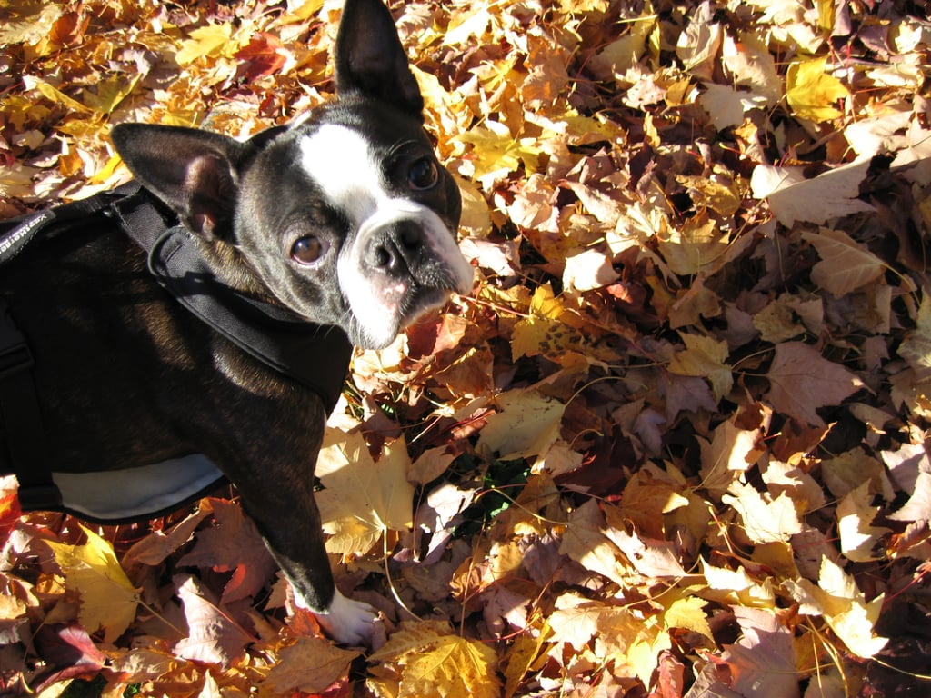 Are you going to let me play in these leaves or what? Source: Flickr user pdxjeff