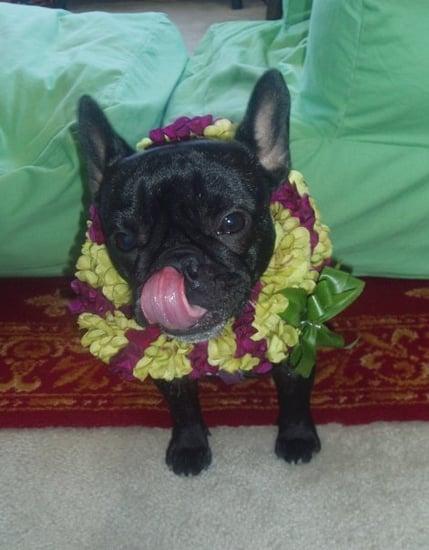 Dog Birthday Party Tips