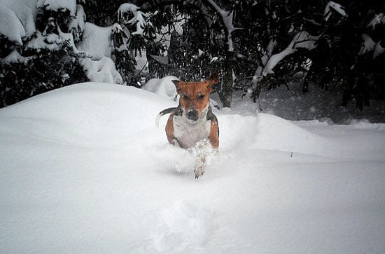 Check out this guy charging through the drifts!  Source: Flickr user SashaW