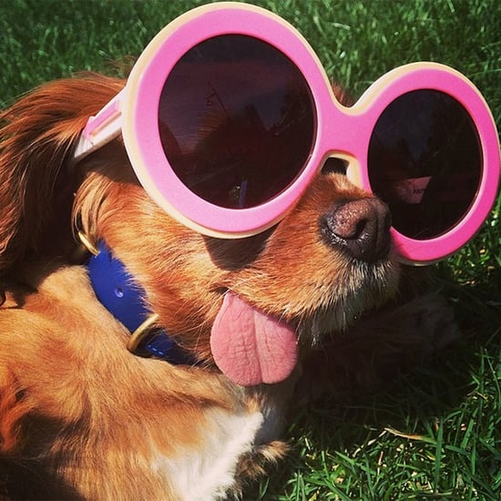 We're Taking Style Advice From a Dog