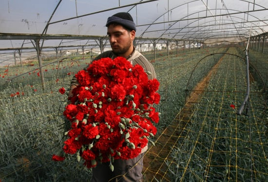 Valentine Reprieve: Israel Lifts Gaza Export Ban For Flowers