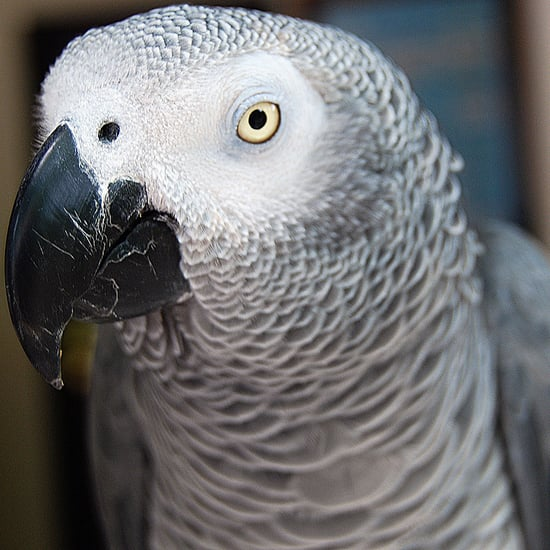Adopting a Rescue Bird