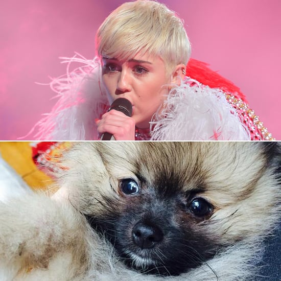 For Miley Cyrus, Getting a New Puppy Has Been Bittersweet