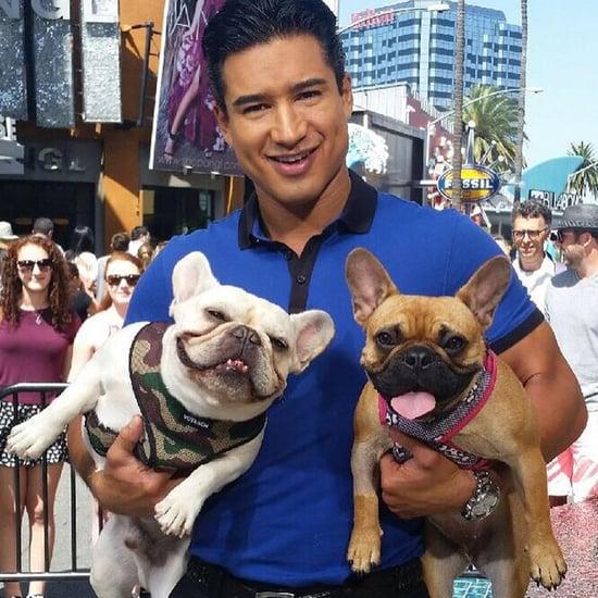 Mario Lopez's Dogs