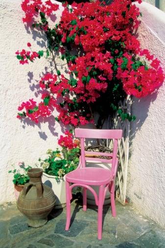 Open House: Overwintering Plants