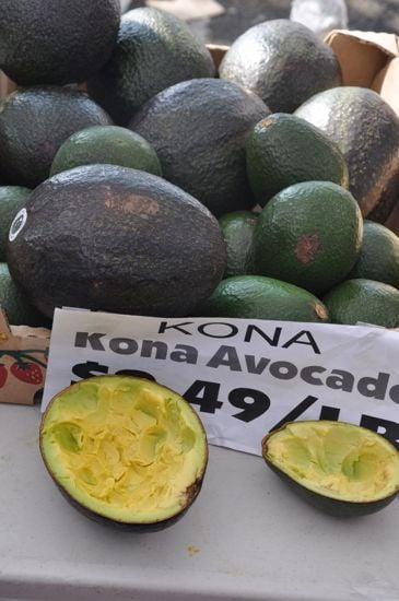 Gigantic Kona Avocado