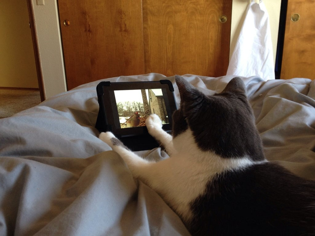 """Before my mom leaves the house, she sets up the kindle so the cat can watch bird videos in bed."" Source: Reddit user tribearatops via Imgur"