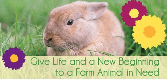 """Give Back: """"Adopt"""" These Easter Babies Instead"""