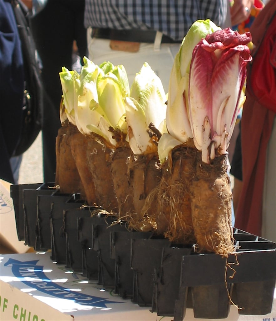 Where Endives Come From
