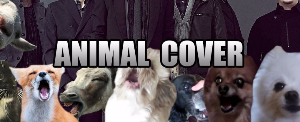 These Animal Covers of Your Favorite High School Songs Will Have You in Tears