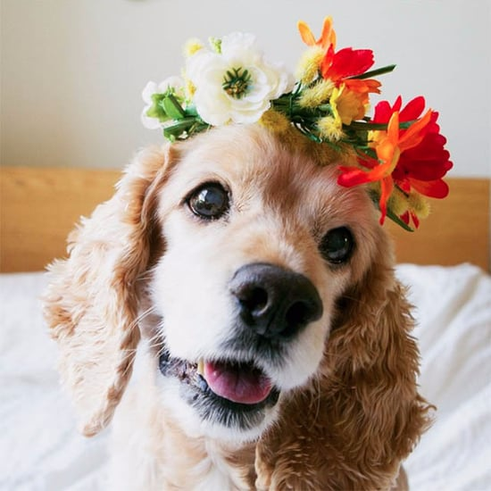 Photos of Senior Dogs