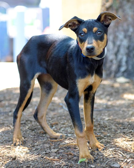 Adopt Me! Mellow Mackenzie Loves Treats, Belly Rubs and Playdates