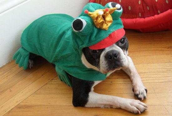 North the Dog Halloween Costume