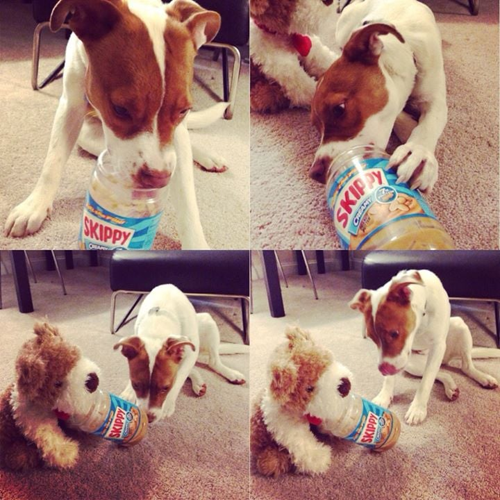 """Friend gave her dog an empty peanut butter jar last night and he shared it with his stuffed puppy."" Source: Reddit user StarryEyedLepus via Imgur"