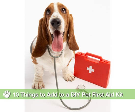 Things in a Pet First Aid Kit