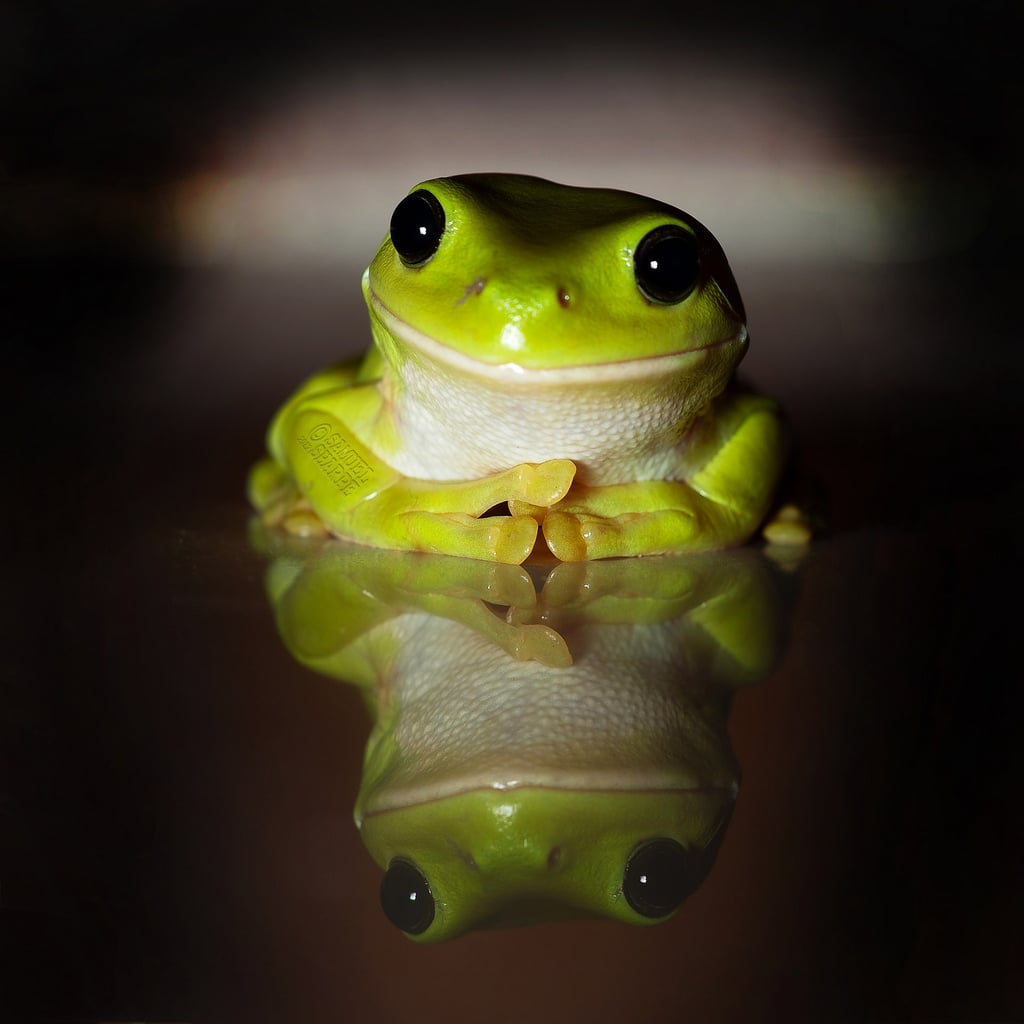 Nothing better than a smiling froggy. Source: Flickr user Samuel Sharpe