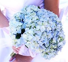 Flowers 101: Hydrangeas