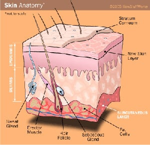 Anatomy of a Tattoo