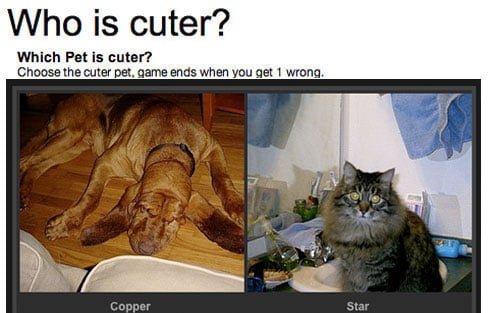 Which Pet Is Cuter? You Decide!