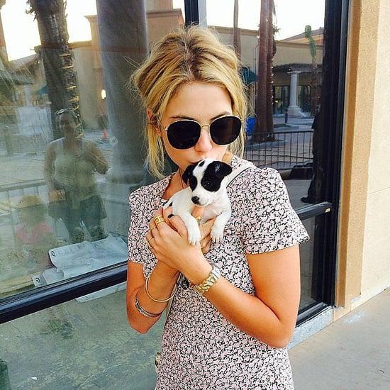 Lots of Licks Between April Celebrities and Pets