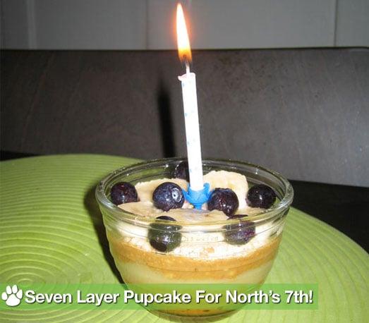 PetSugar's Original Seven Layer Pupcake Recipe