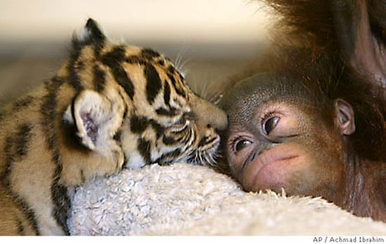 Interspecies Love: A Brief But Intense Affair