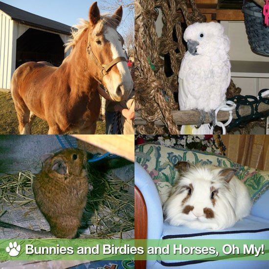 Pictures of Bunnies, Rabbits, Horses, and Birds to Adopt