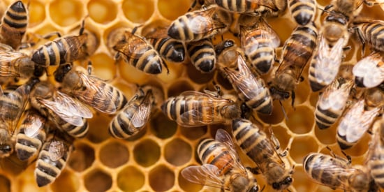 Honeybee Deaths Getting Worse: We Lost 44% of Colonies Last Year