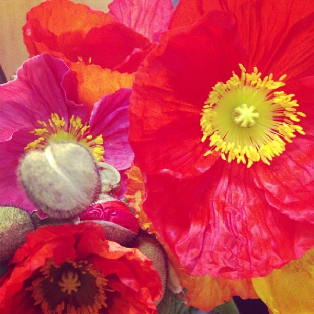 Poppies! Is there anything nicer than big, bright flowers during the week?