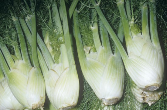 Guide to Fennel