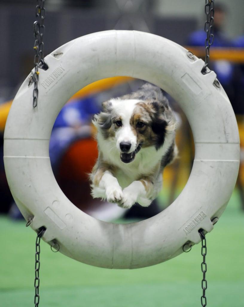 Play Organized Doggie Sports