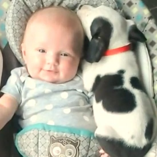 Video of Baby Girl and Pitbull Puppy Cuddling Together