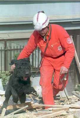 To the Rescue: Earthquake Safety For Pets