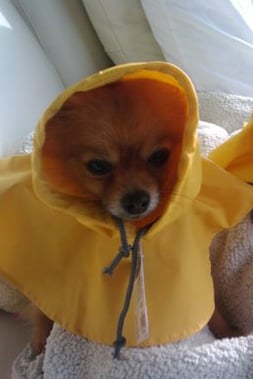 Pet Pic of the Day: Rainy Day