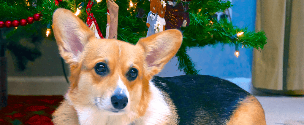 3 Dangers to Keep Your Dogs Away From This Holiday Season