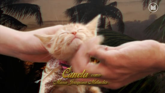 Telenovela With Cats From Mas Mejor | Video