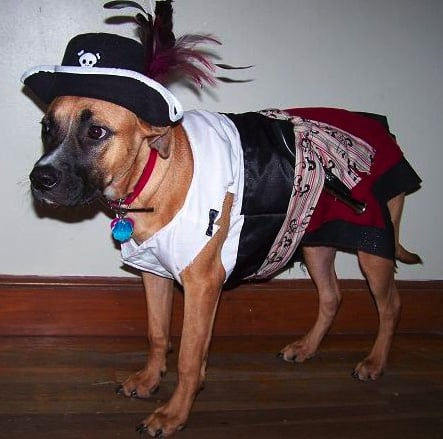 Pirate Pooch