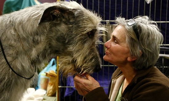 Cute Dogs From Behind-the-Scenes at the 2009 Westminster Kennel Club Dog Show