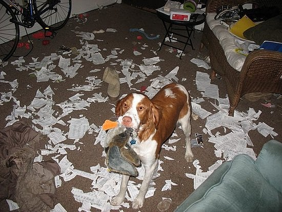 Pet Pics on Petsugar 2008-07-24 08:00:19