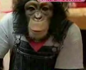 Heartless Bastards Punk a Chimp