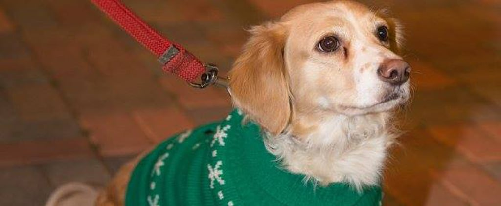 The Pups in These Sweaters Are Anything but Ugly