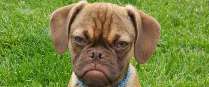 There's a Dog Version of Grumpy Cat, and He's Awesome