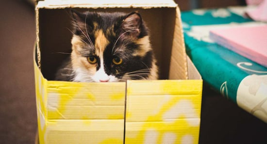 Schrodinger's Cat Was A Joke (And More Science We Misuse)
