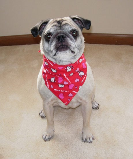 Pet Bandanna, Hello Kitty Hearts