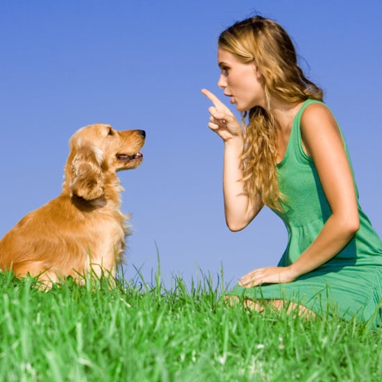 What Words to Use When Dog Training