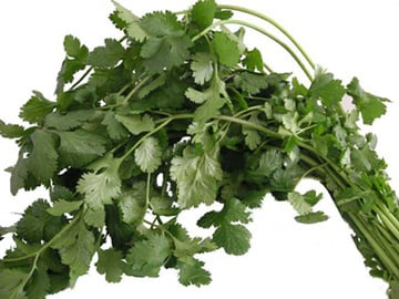 Cilantro Kills Bacteria So You Don't Have To