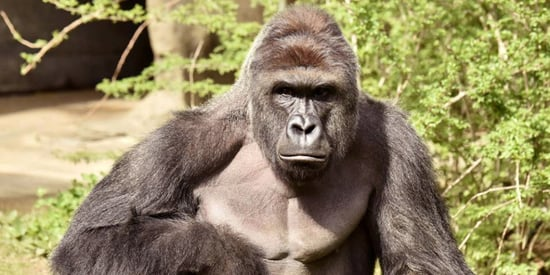 Stop Blaming the Cincinnati Zoo Mother!
