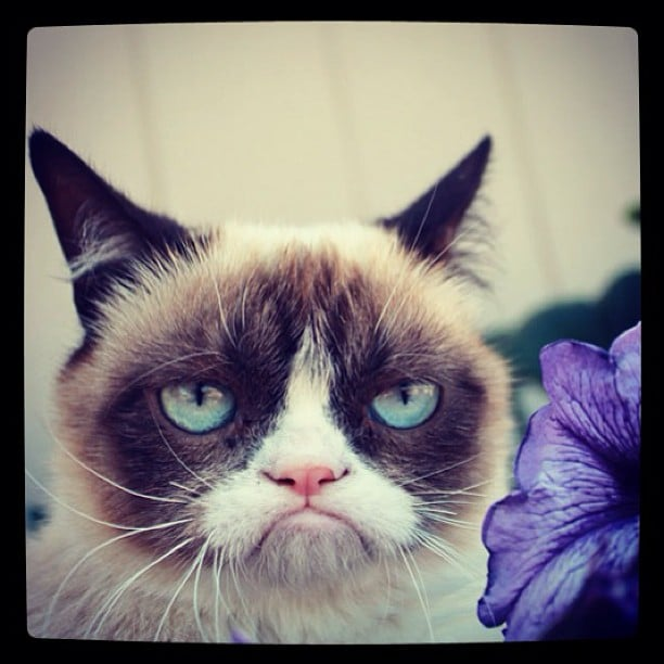 Grumpy cat fell in love with a Spring flower (well, maybe not). Source: Instagram user realgrumpycat