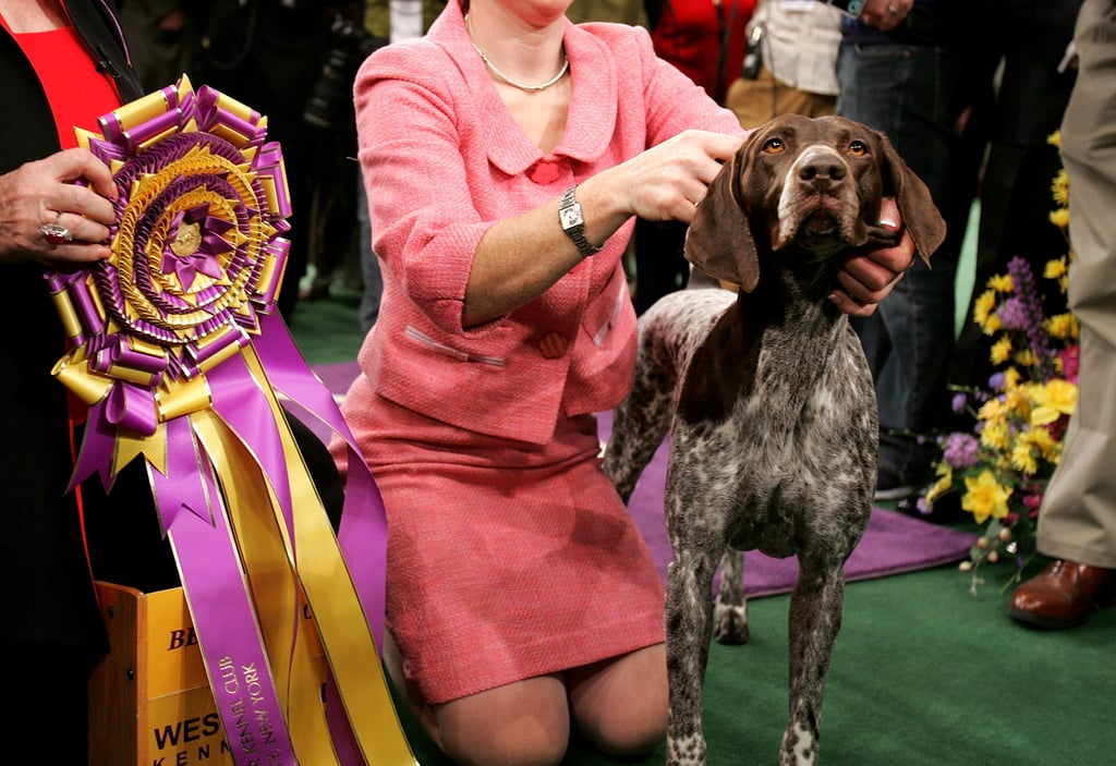 German Shorthaired Pointer: Two